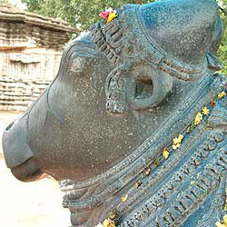Nandi the bull at the